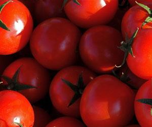 iranskie-pomidory-uzhe-na-rynke-v-rf