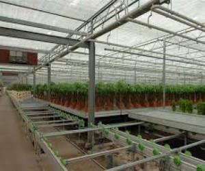 v-xabarovske-budut-prodavat-tomaty-vyrashhennye-v-teplicax-v-blizhajshee-vremya