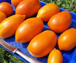 pomidor_banan